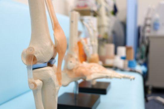膝関節のモデル