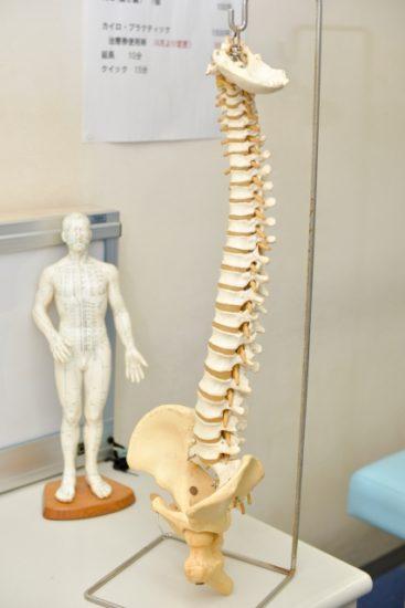 脊柱のモデル